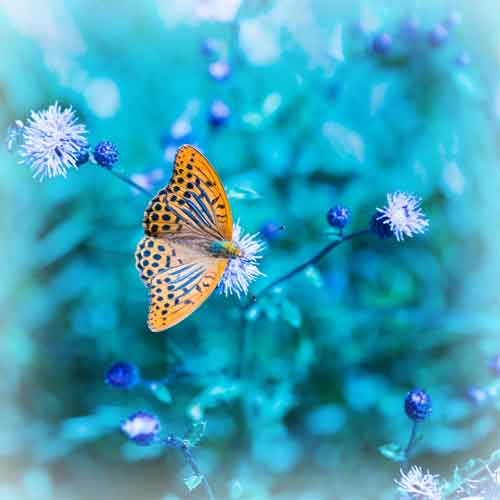 Butterfly on blue background